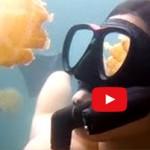 GoProは最高に楽しそう! 撮った映像をYoutubeで世界で共有できる!